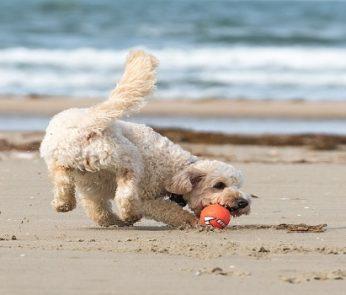 Spiagge per cani