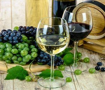 Feste del vino e dell'uva nelle Marche, dal bianco al rosso