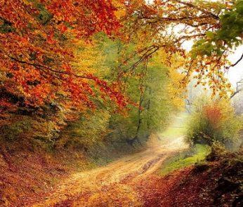 Foliage nelle Marche: il cambio colore delle foglie in autunno