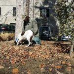 Fiera Nazionale del Tartufo a Sant'Angelo in Vado 2018: un cane da tartufo