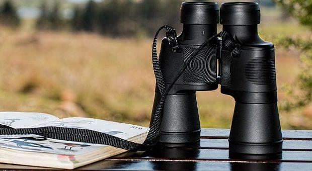 Birdwatching nelle Marche
