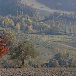 Foliage Marche: Riserva Naturale Canfaito