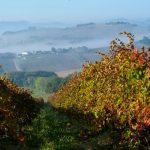Foliage Marche: Vigneto a Camerano