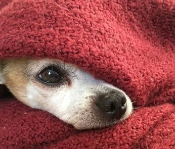 Capodanno 2020, botti vietati nelle Marche: cane impaurito