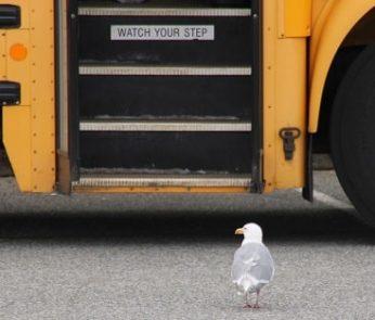 Autobus nelle Marche